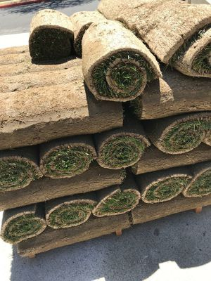 Sod tall fescue for Sale in Los Angeles, CA