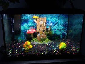 10 gallon fish tank and bookshelf for Sale in Glendale, AZ