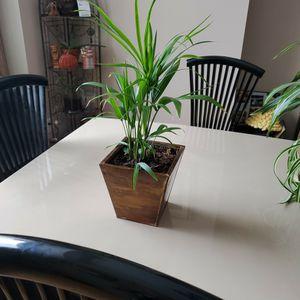Pot/ Plant for Sale in Colorado Springs, CO