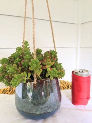 Jelly Bean Succulent Plants in Hanging Ceramic Planter Pot - Real Indoor House Plant for Sale in Auburn, WA