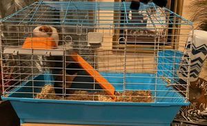 Guinea pigs for Sale in Los Angeles, CA