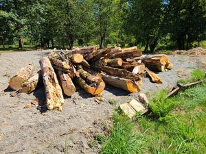 Free firewood logs and pieces for Sale in Snohomish, WA