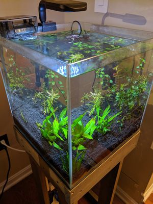 Aquarium, Dirted Planted for Sale in Dumfries, VA