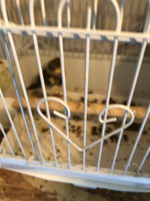 Cage for Sale in Corona, CA