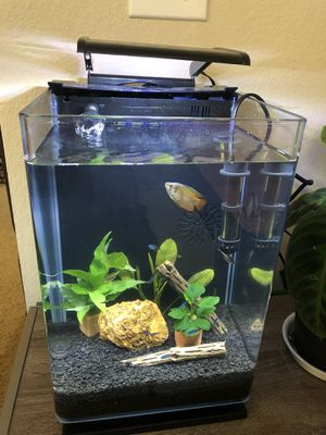 Aquarium tank 5 gallons for sale! for Sale in San Mateo, CA