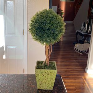 Everygreen Topiary for Sale in Roseville, CA