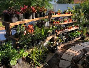 Potted Plants (Indoor & Outdoor) for Sale in Bradenton, FL