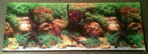 Double sided background for fish tank. for Sale in Sunbury, PA