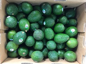 avocados 🥑 84 pieces in each box for $30.00 nice and green . Bronx Ny warehouse for Sale in Teaneck, NJ