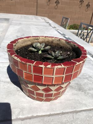 Potted Succulent- Higley/Riggs Pick Up for Sale in Gilbert, AZ