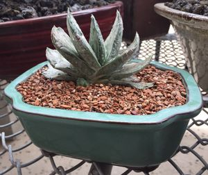 Succulent and cactus plants for Sale in West Covina, CA
