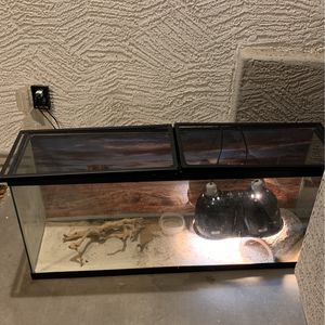 Lizard, Cage, and Resources Included for Sale in Glendale, AZ