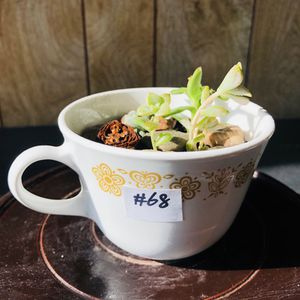 #68. Assorted baby size succulents in teacup for Sale in Chicago, IL