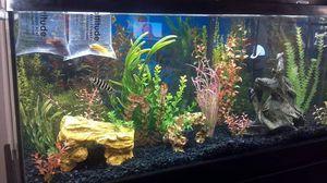 55 Gallon Fish Tank for Sale in Fresno, CA