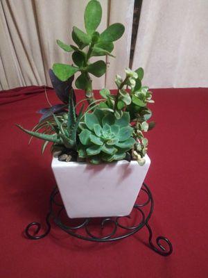 Succulents en maceta de cerámica pequeña for Sale in South Gate, CA