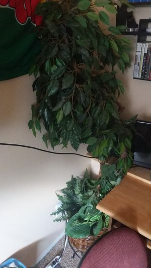 Fake plant for Sale in Tacoma, WA