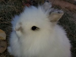 Bunny for Sale in Citrus Heights, CA