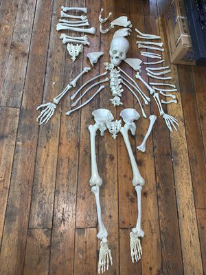 Full size skeleton bones Halloween prop extras for Sale in Chicago, IL