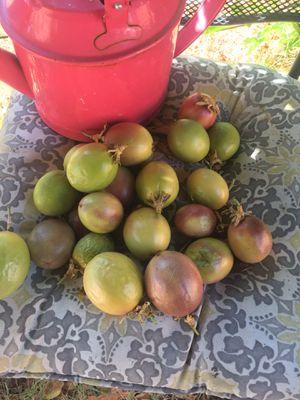 Passion fruit ( Granadillas, for Sale in Los Angeles, CA