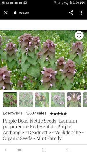 Organic Purple Dead Nettle Buds for Sale in FAIRMOUNT HGT, MD