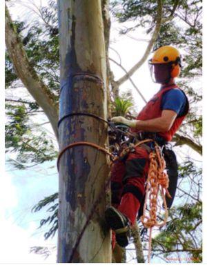 EXPERTS TREE SERVICES PALACIOS, FREE ESTIMATES ,,HABLO ESPAÑOL. for Sale in Alexandria, VA