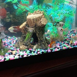 Fish Tank for Sale in San Leandro, CA