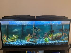 55 gallon fish tank for Sale in Rialto, CA