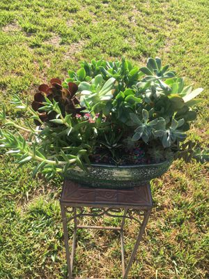 Rustic Vase With Variety Of Succulent for Sale in Fontana, CA