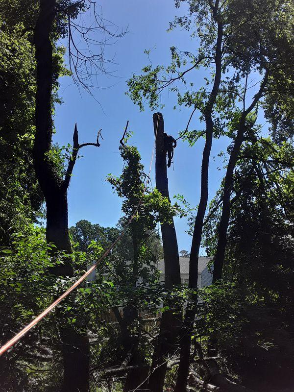 We cut trees. Cortamos árboles.