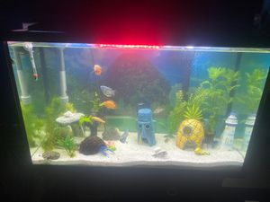 30 gallon fish tank with lid and filter for Sale in Arlington, TX