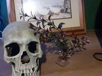 Skull / Fish Decor for Sale in Stockton,  CA