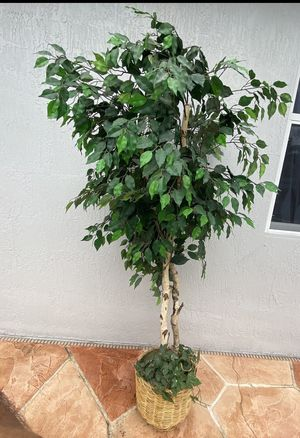 Plant for Sale in Miami, FL