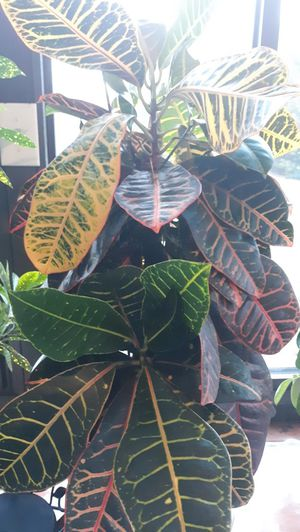 Live plant for Sale in Lexington, KY