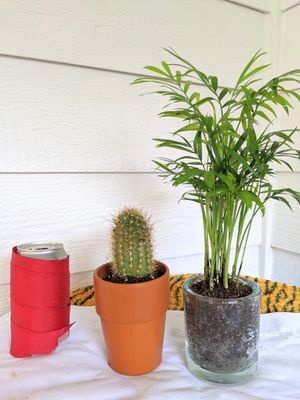 Pair of Potted Cactus and Parlor Palm Plants for $10- Real Indoor House Plant for Sale in Auburn, WA
