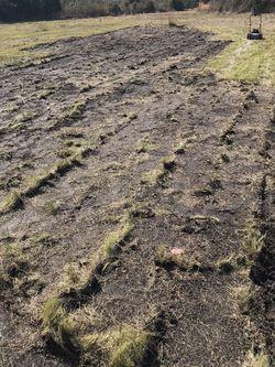 Bahia Grass for Sale in Frostproof,  FL