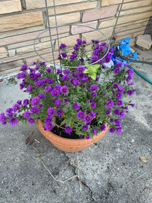Outdoor plant for Sale in Princeton, NJ