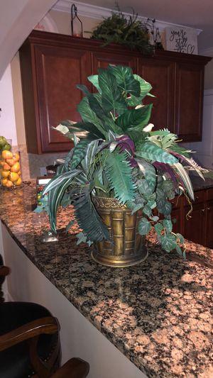 Dieffenbachia Desktop Foliage Plant in Pot for Sale in Simpsonville, SC