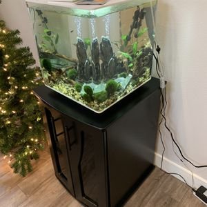 Aquarium - Biorb 60L Cube Set W/ Stand for Sale in Tacoma, WA