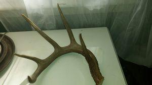 Antlers for Sale in Leesburg, VA