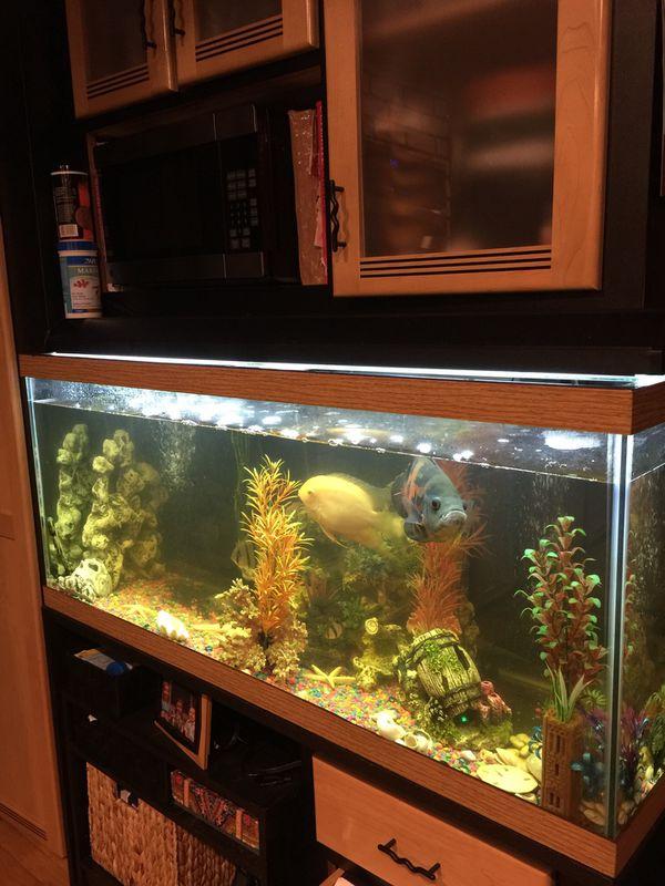 75 gallon aquarium with accessories