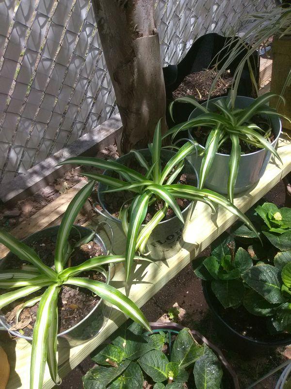 Plants 4 Sale