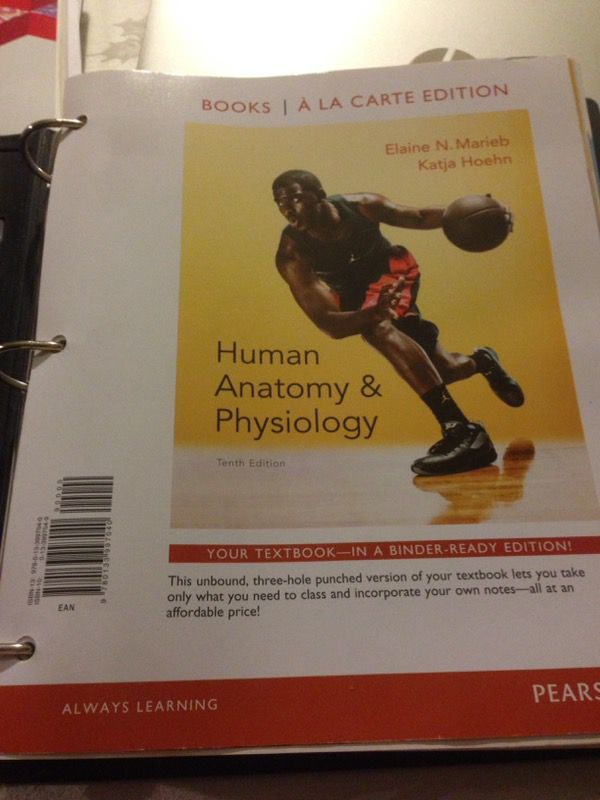 Human Anatomy And Physiology 10th Edition By Elaine Marieb For