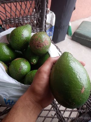 Avocados /special get your Avocados on for Sale in West Palm Beach, FL