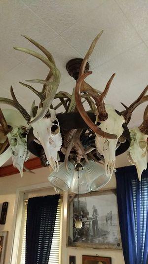 European Buck Skull Mount overhead light for Sale in Victoria, TX