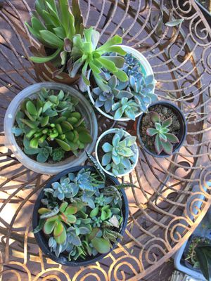 Many plants for Sale in San Diego, CA