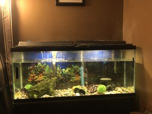 55 gallon fish tank / aquarium with stand for Sale in Richmond, KY