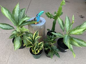Plants for Sale in Kissimmee, FL