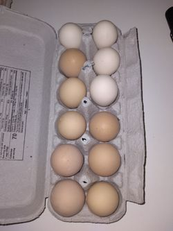 Fertile, Organic Chicken Eggs. Bard Rock And Speckled Sussex. for Sale in Fair Oaks,  CA