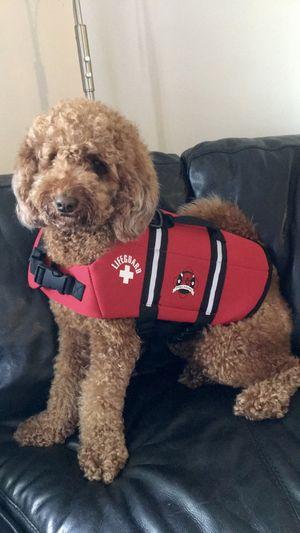 Dog life jacket / life vest (medium) for Sale in Sunrise, FL