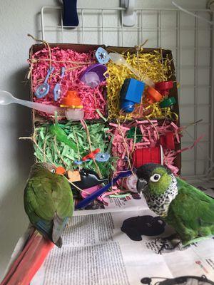 Bird/squirrel/sugar glider toys made here for Sale in Crestview, FL